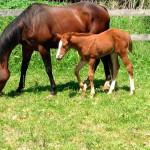 Катание на лошадях в Калужской области