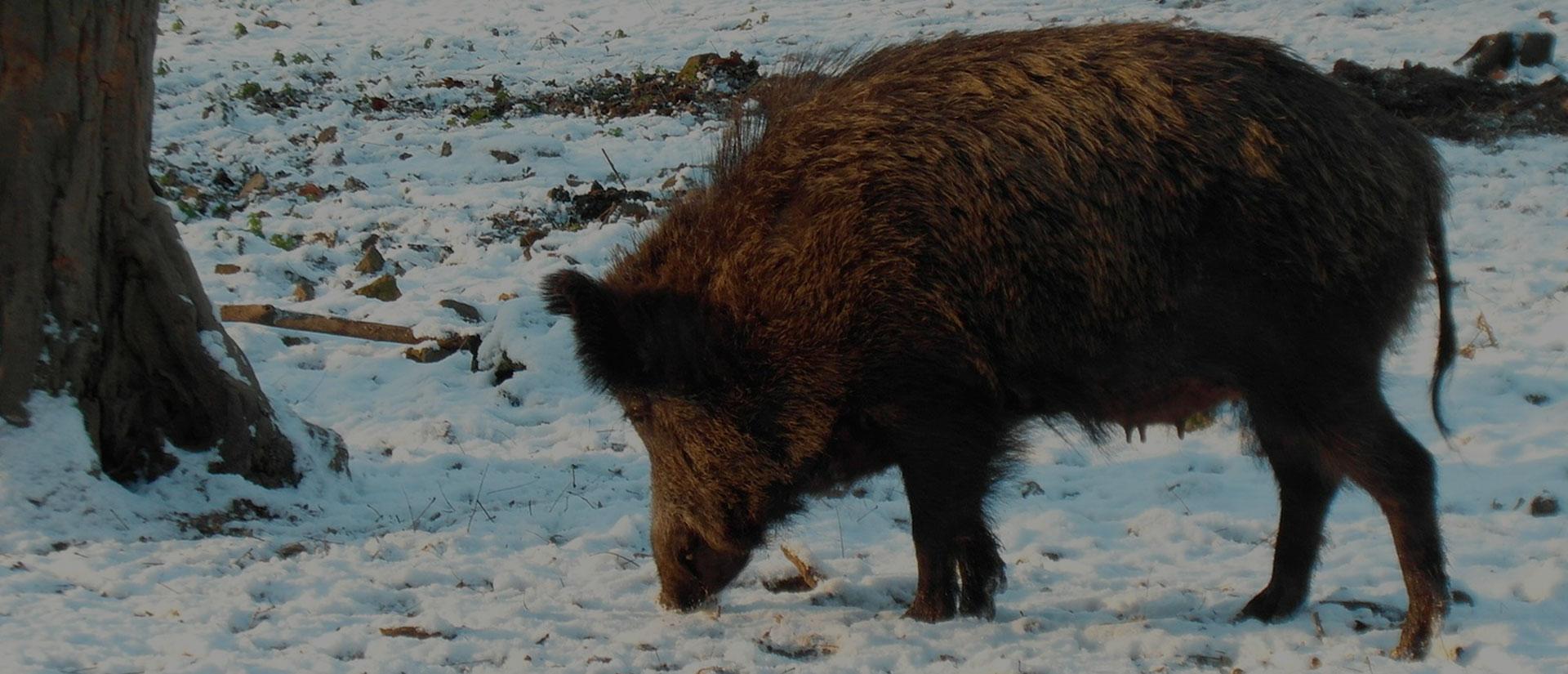 Охота в Калужской области в Сафари Паркъ