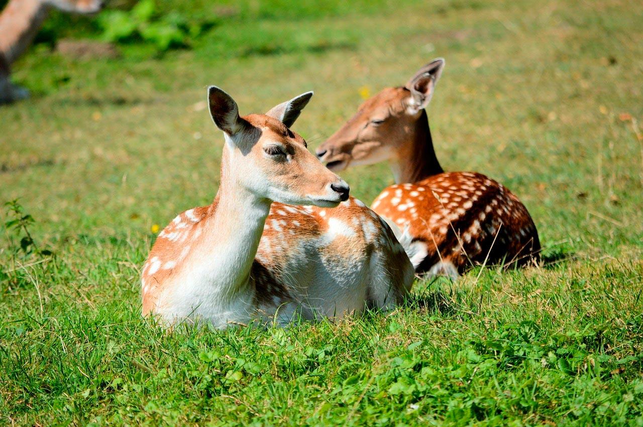 Охота в Сафари Паркъ