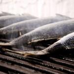 sohranenie-poyamannoy-ryby-i-ispolzovanie-v-pischu