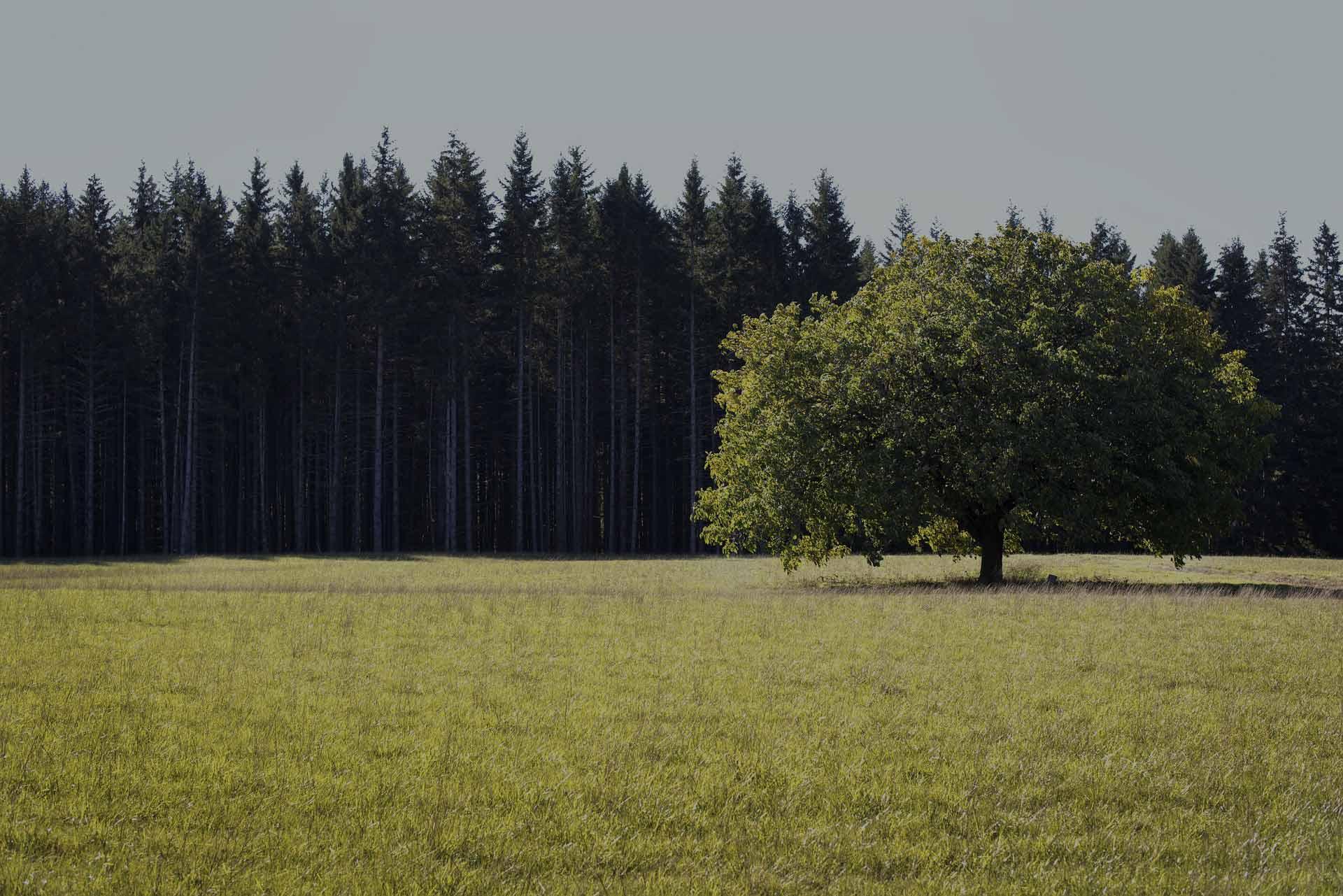 Продажа участков Лесные Угодья