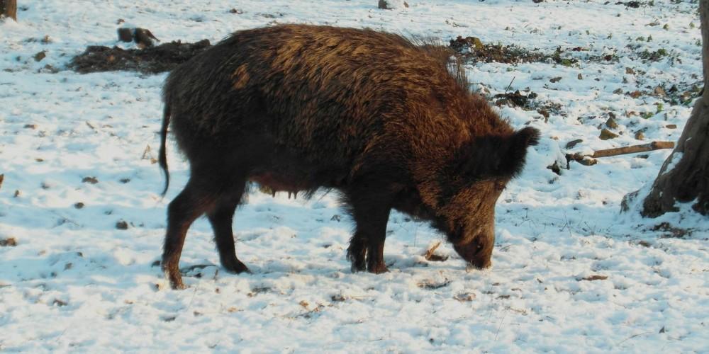 http://vlesu.ru/wp-content/uploads/2015/10/ohota-v-kalujskoy-oblasti-v-safari-parke-01.jpg