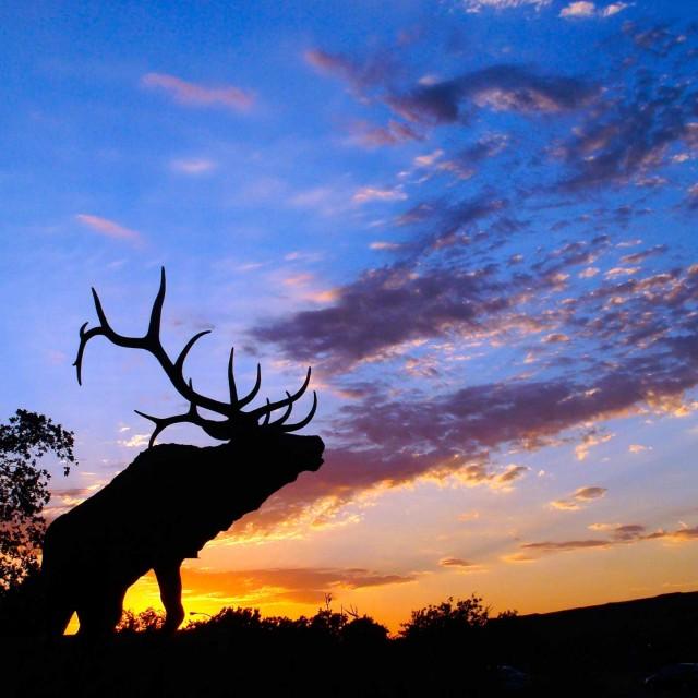 Охота на копытных в Сафари Паркъ с 17 октября!
