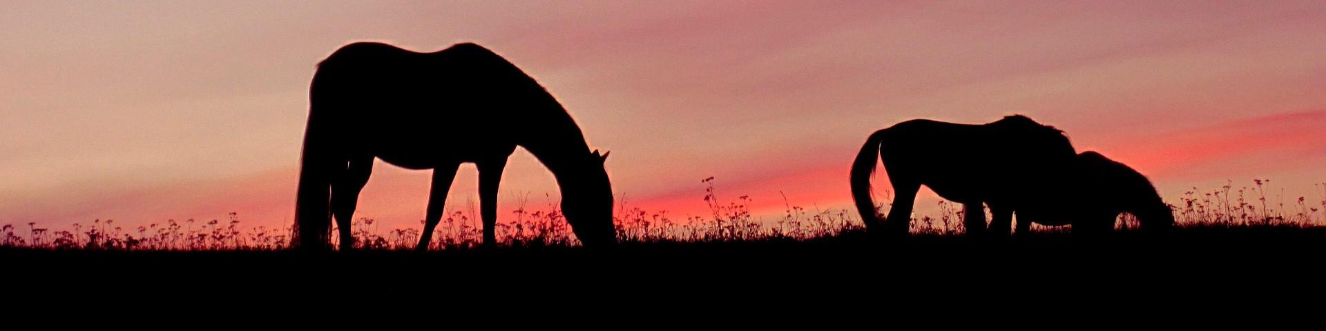 Конные прогулки в Сафари Паркъ