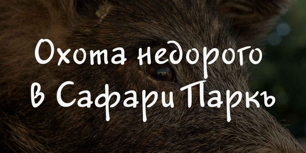 http://vlesu.ru/wp-content/uploads/2016/06/ohota-nedorogo-safari-park001.jpg