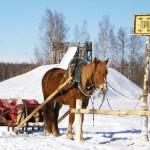 Катание на лошадях рядом с Москвой